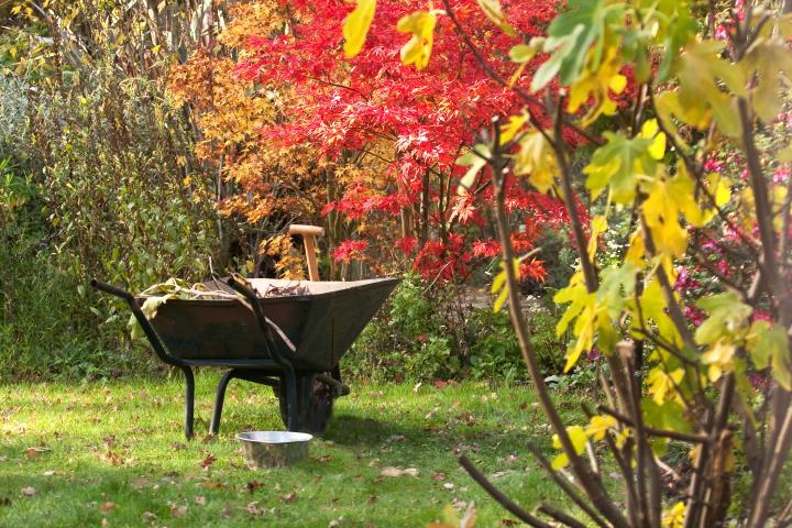 Prace ogrodowe jesienią - trawnik